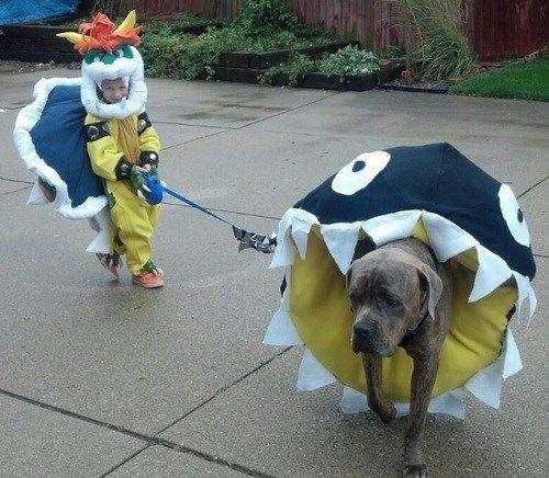 Super Mario Bros Animal Costumes Animals Wearing Gamer Gear