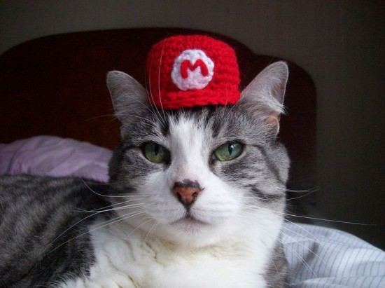 smb cat wearing mario hat.jpg