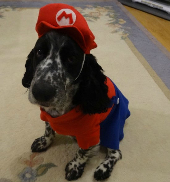 smb spotted spaniel mario costume.jpg